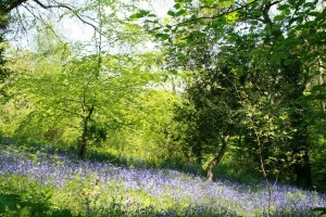 Heligan-in-May-300x200