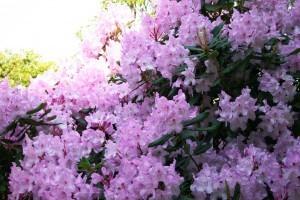 spring-flowers-300x200