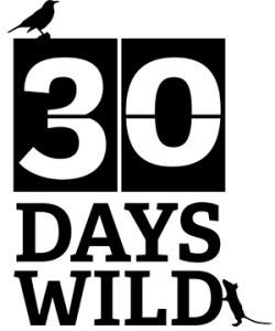 30DAYSWILD_ID1-black-web-250x300