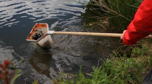 REBOOT-pond-dipping-300x167