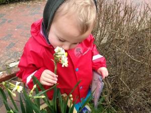 nice-daffodils