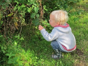 sam-picking-blackberries