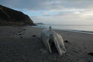 whale-2