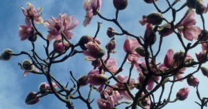 Bosinver_blossom-300x157