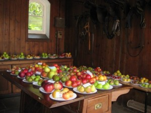 apples_galore