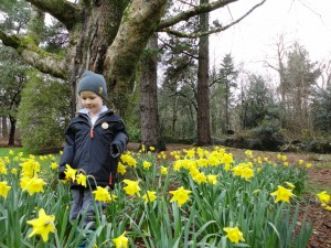 blog-daffodils-at-trelissick-1024x768