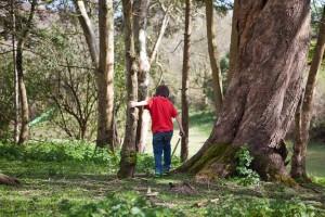 bosinver_woods