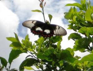 butterfly-1024x785