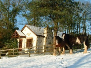 happy-h-snow-300x225