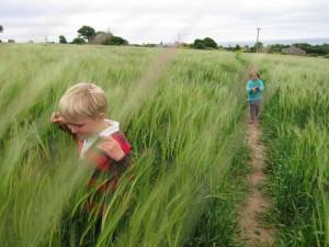 kids-in-barley