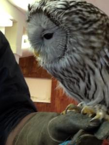 owl-close-up-2-web-225x300