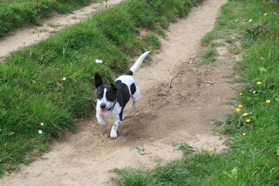Bosinver's self catering cottages are a great base for a dog friendly holiday in Cornwall