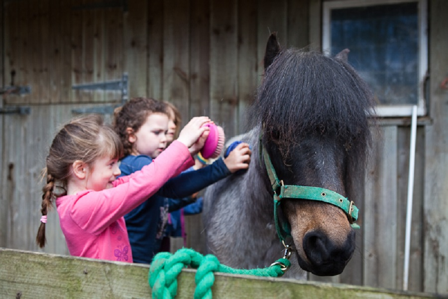 Toddlers will love meeting Bosinver's resident ponies
