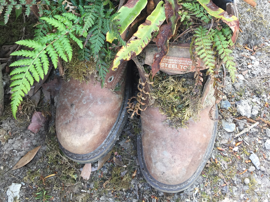 Shoes as planters at Enys Gardens near Penryn, Cornwall