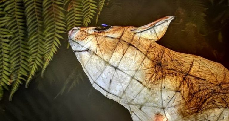 A Lantern Mouse at Heligan by Charlie Smith