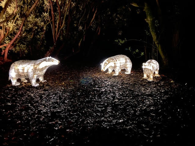 Lantern badgers at the Lost Gardens of Heligan