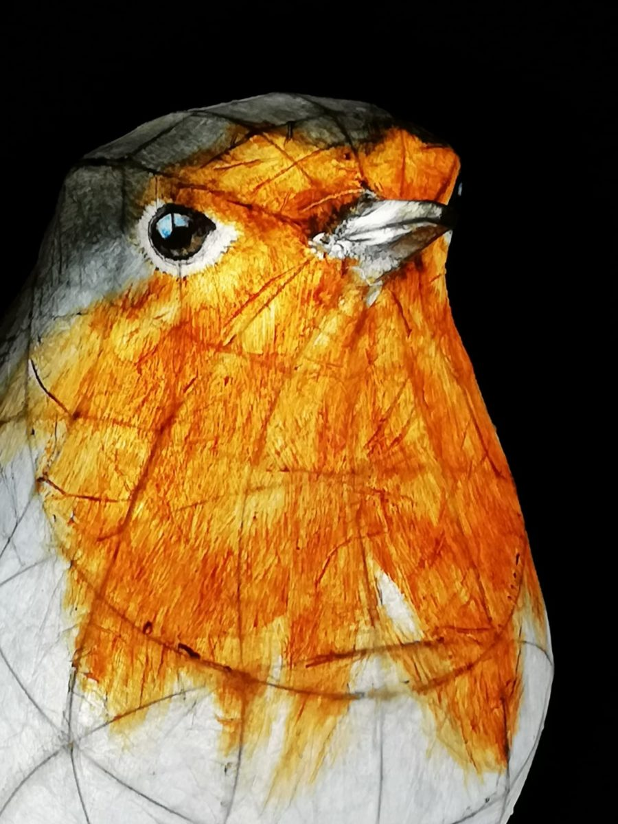 Lantern robin by Charlie Smith