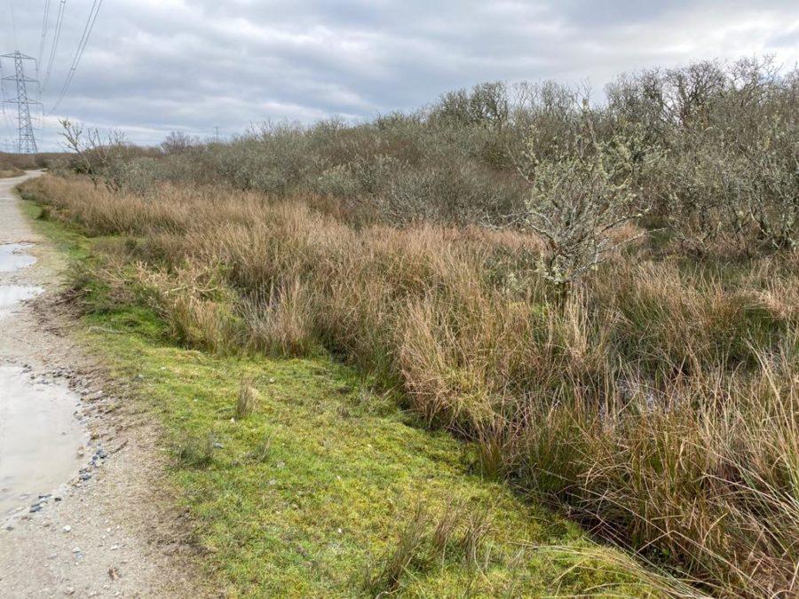 Goss Moor in Cornwall