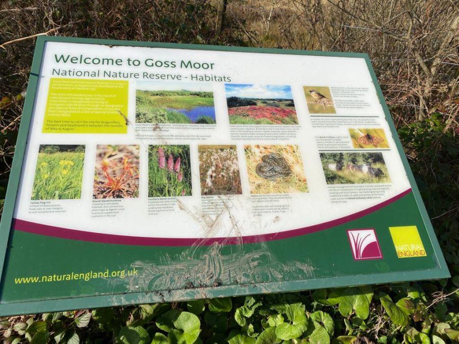 Goss Moor Nature Reserve in Cornwall