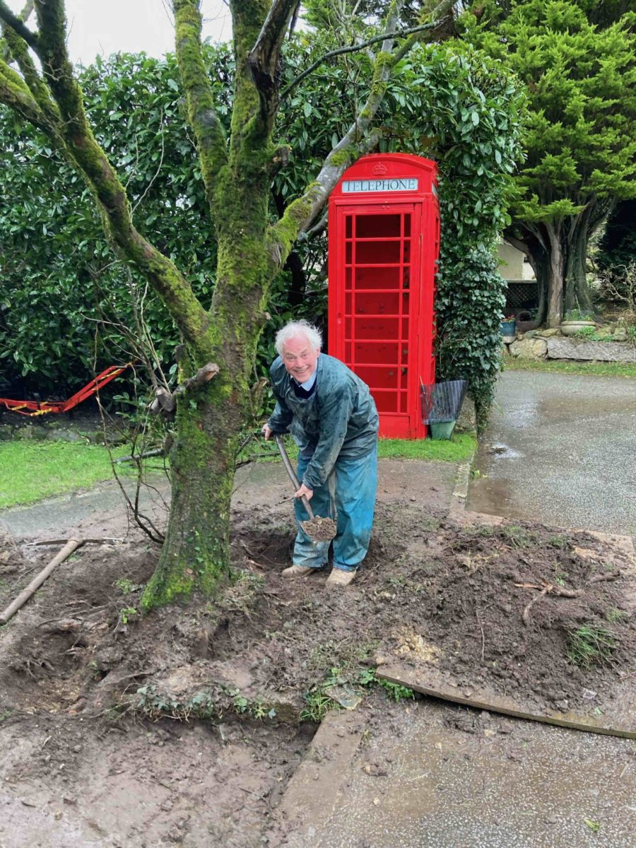 Farmer Dave excavates the roots of the elm tree at Bosinver