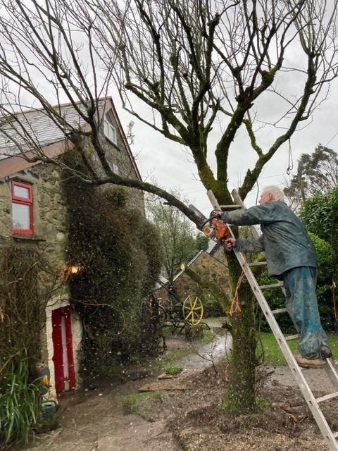 Farmer Dave cutting off branches to lessen the weight of the elm tree