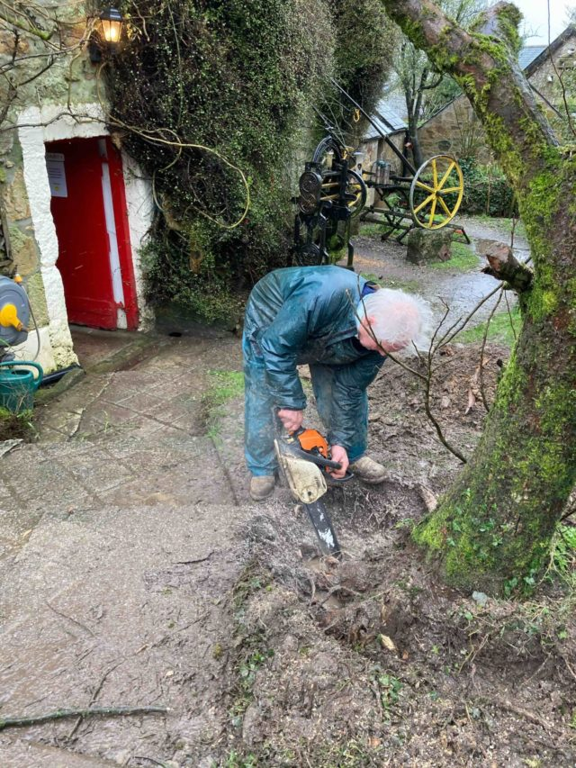 Farmer Dave severs the roots of the elm tree.