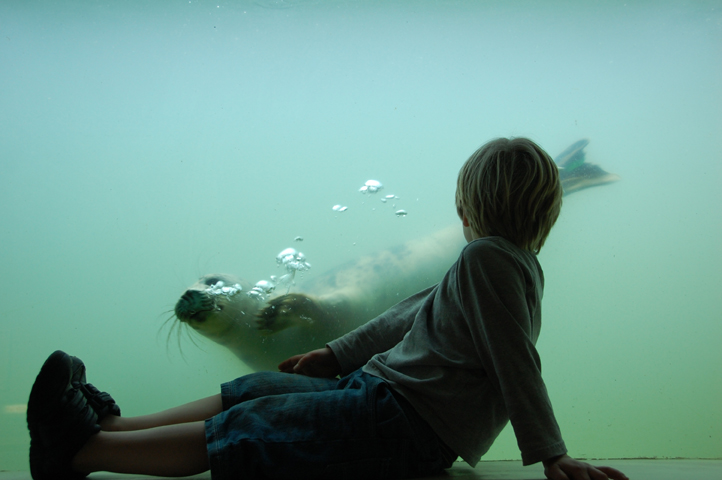 Child watching a seal at the Cornish Seal Sanctuary