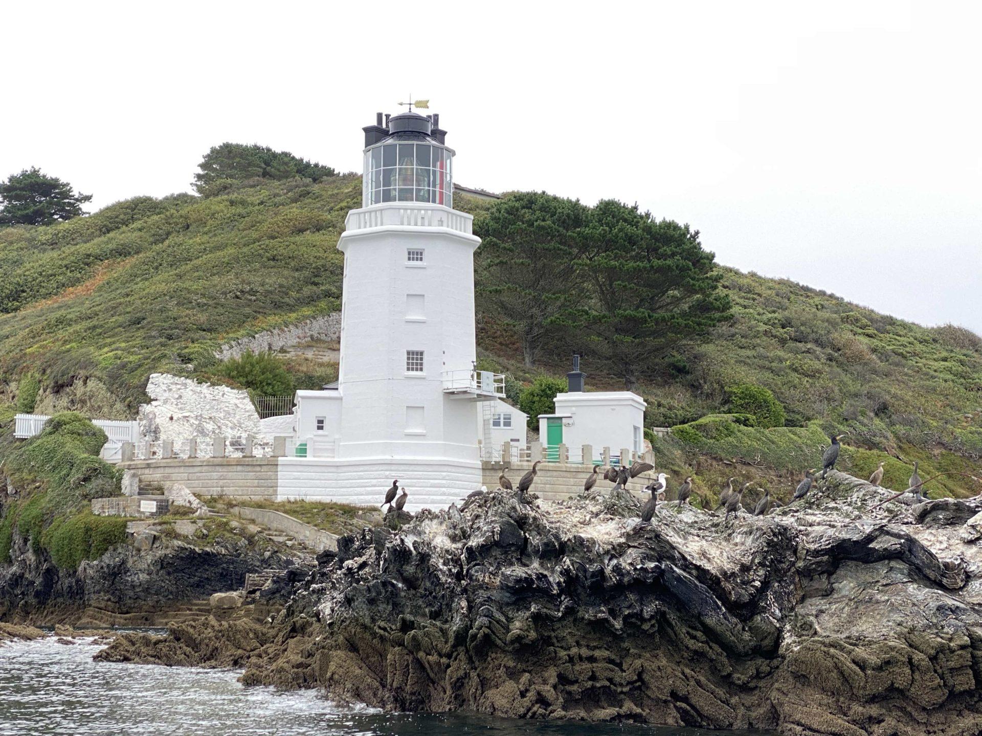 Shags and cormorants near St Anthony Lighthouse